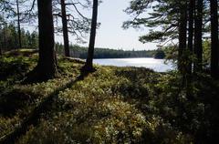 glittering lake view - stock photo
