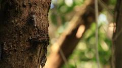 Cicada Mating Stock Footage