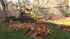 Girl in yard raking leaves tulip tree dight with golden leaves Stock Footage