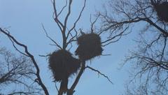 migratory bird - stock footage