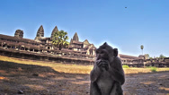 Stock Video Footage of Monkey in Angkor Wat temple