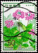 japan - circa 1977: a stamp printed in japan shows primula sieboldi f.spontan - stock photo