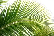 Stock Photo of palm leaves