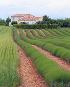 Stock Photo of provence