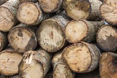 wood log - stock photo