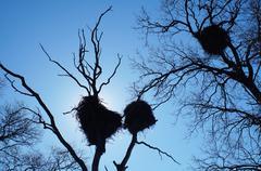 stork nests - stock photo