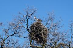 stork nest sky - stock photo