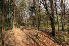 Nature Trail Trees In The Woods On A Spring Day, Nature, Friendly, Hiking - stock photo