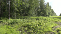 field in the forest - stock footage