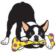Boston terrier Stock Illustration