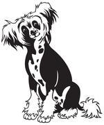 Chinese crested dog black white Stock Illustration