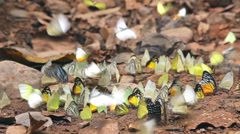 Colorful tropical butterflies Stock Footage