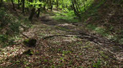 Deciduous forest with creek at early spring; steadicam Stock Footage