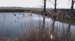 windswept reeds at the edge of the lake - stock footage