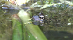 Frog out of water, close-up,slowmotion Stock Footage