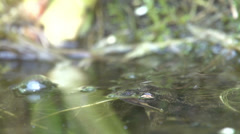 Frog out of water, close-up 2 Stock Footage