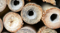 Insect hotel of bamboos Stock Footage