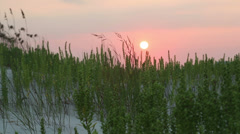 Sunrise over grassy sand dunes , Brunswick County, NC Stock Footage