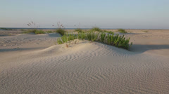 Brunswick County, NC sand dunes Stock Footage