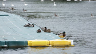 Stock Video Footage of ducks on a raft diving