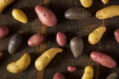 raw organic fingerling potato medley - stock photo