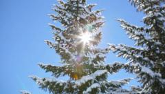 Sun and trees Stock Footage
