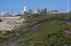 dune rehabilitation on durban beachfront with buildings in background - stock photo