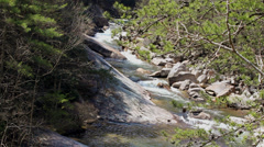 White water rocky river pine trees Stock Footage