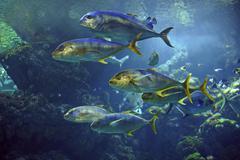 Coral fishes in the aquarium Stock Photos
