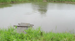 Small pond bridge and fish on water surface in rainy day Stock Footage