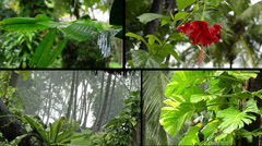 tropical rain in forest - combined to one clip - with audio - stock footage