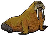 Stock Illustration of walrus