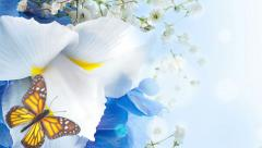 Bouquet of blue irises, white flowers and butterfly Stock Footage
