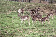 a herd of deer - stock photo
