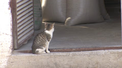 Cat in the doorway of a watermill Stock Footage