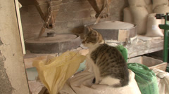 Cat on the sack in water mill Stock Footage