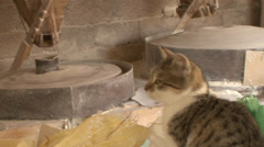 Cat playing on the bags in water mill Stock Footage