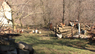 Stock Video Footage of Poultry in the backyard rooster 6