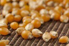 Organic raw yellow corn kernels Stock Photos