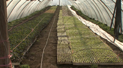 Greenhouse with various nursery plants Stock Footage