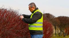 Worker with gardener shears near bush Stock Footage