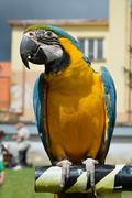 Parrot Ara Stock Photos