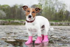 dog in the rain - stock photo