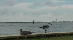 Birds near shore at Southport, NC Stock Footage