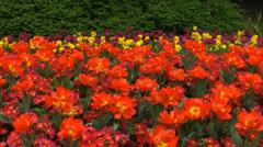 Colorful flowers at saint james park, london, england, circa april 2014 Stock Footage