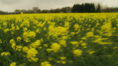 Fast moving through Normandy yellow field Stock Footage