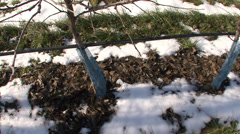 Protected apple trees in winter Stock Footage