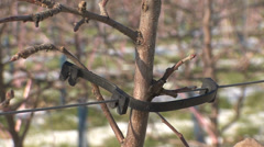 Protection on apple tree in winter Stock Footage