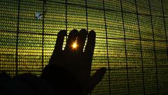 Hand against the fence; sunset, abstract, freedom, duress, imprisonment Stock Footage