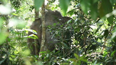 Wild Elephant in a middle of the forest Stock Footage